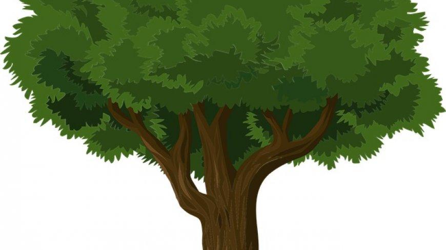 Grafika drzewa liściastego.